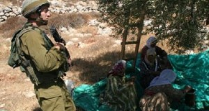 Join the 2011 Olive Harvest Campaign