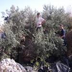 Farmers in Qusin