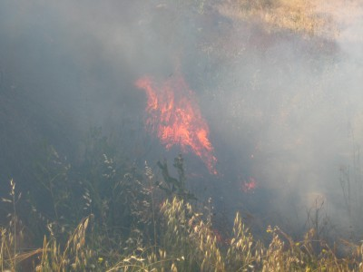 Israeli settlers suspected of starting a fire on Palestinian land near Hebron.
