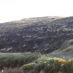 Palestinian farmland left burned by Israeli settlers