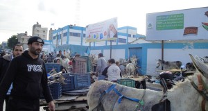 Donkey carts lined up opposite the market in Jabaliya refugee camp (Photo: Lydia de Leeuw, A Second Glance) - Click here for more images
