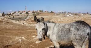 Demolitions in Umm al Kheir - Click here for more images