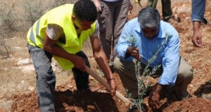 Planting trees in Aqraba