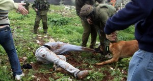 Kufr Qaddoum dog attack