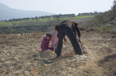 Burin villagers planting olive trees