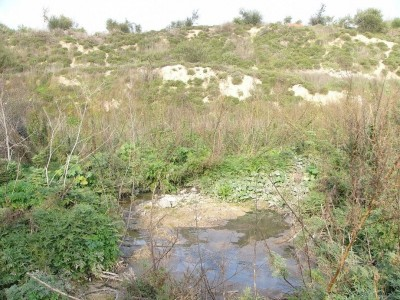 Flooded Palestinian agricultural land