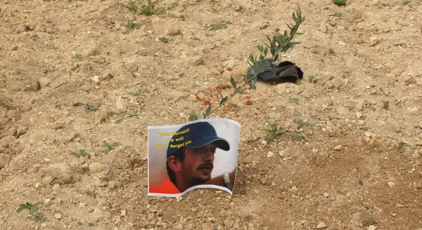 Poster of deceased ISM activist Tom Hurdnall is planted alongside an olive tree.