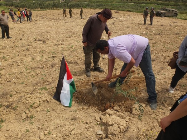 Olive trees are planted to commemorate Land Day