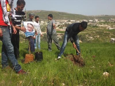 Tree planting with Rachel Corrie posters in Asira al Qibliya