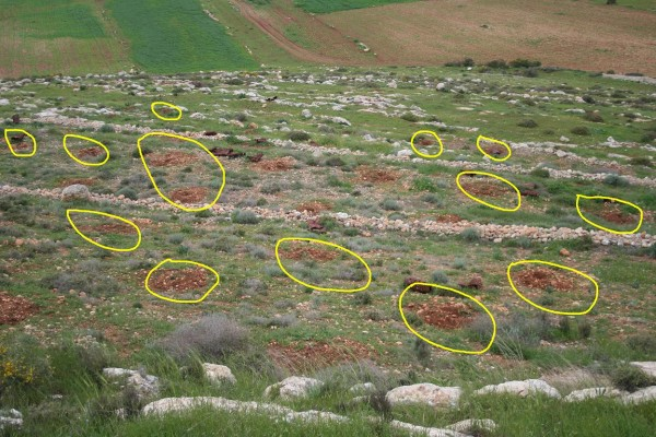 Jamal Kanaan's land in 2012 after the Israeli military had removed his trees - circles indicate where they had been planted. Photo credit Beit Dajan Municipality