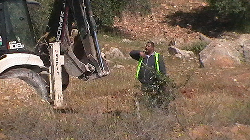 Israeli bulldozer about to uproot an olive tree (Photo by CPT)