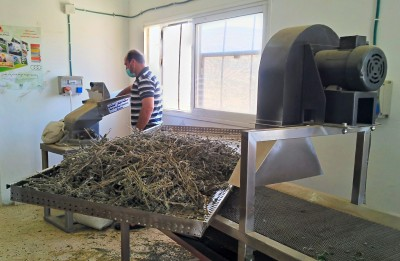 Local man at work in the new tea factory in al-Aqaba.