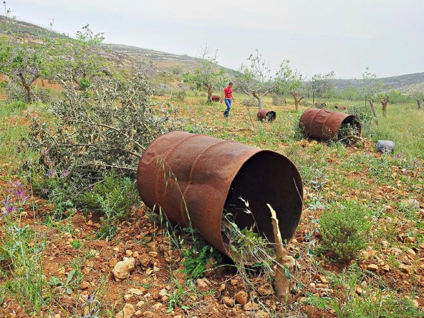 Trees destroyed by settlers on 2nd May 2013