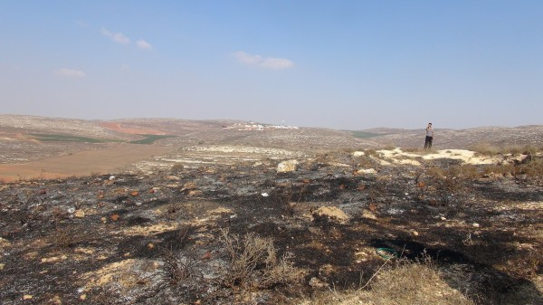 More burnt land, on the back Esh Kodesh settlement (Photo by ISM)
