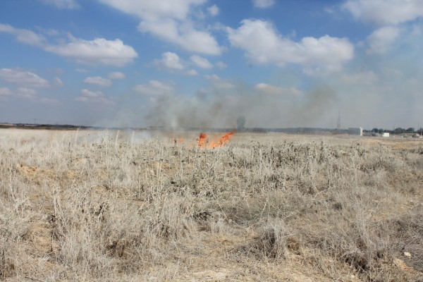 A field burns after a tear gas canister fired by Israeli forces ignites it. (Photo by Joe Catron)