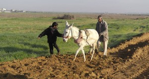 Israeli forces' gunfire blocks Palestinian farmland in Gaza