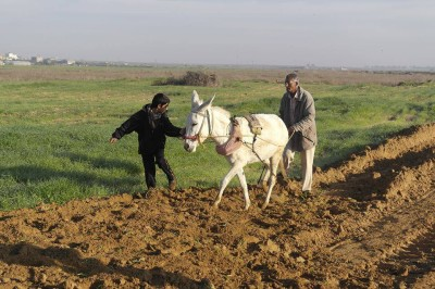 In the besieged Gaza Strip, Israeli forces' gunfire blocks Palestinian farmland