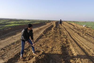 In the besieged Gaza Strip, Israeli forces' gunfire blocks Palestinian farmland
