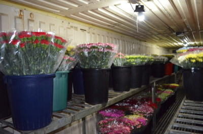 Flowers from Gaza being prepared for export (Photo by Corporate Watch)