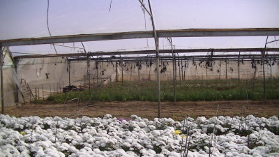 Hassan Hijazi's greenhouses in Rafah (Photo by Corporate Watch)