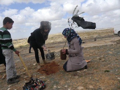 Palestinians planting olive trees near Susiya (Photo by Operation Dove)