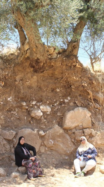 Feryal and Arwa Abu Haikal sitting under their olive tree, trying to protect it from damage or destruction (photo from https://www.facebook.com/groups/Save.telrumeida/).
