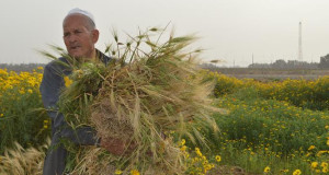 farmer khuza'a
