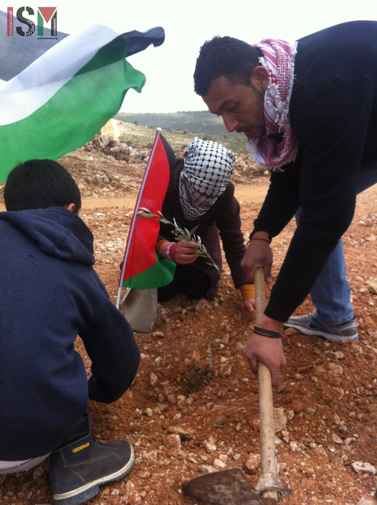 Olive tree and flag planting at Land Day protes, Wadi Fukin