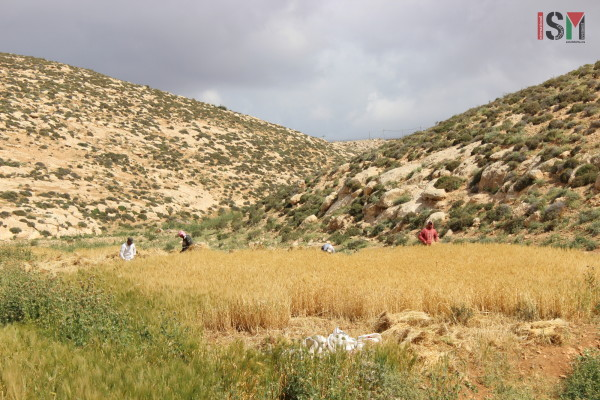 Hiding away from the view of settlers and soldiers, men and women harvest their land.