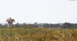 militarytower