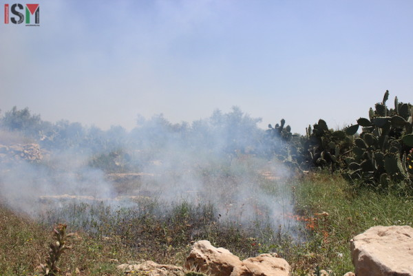 Fire in the wheat fields caused by tear gas