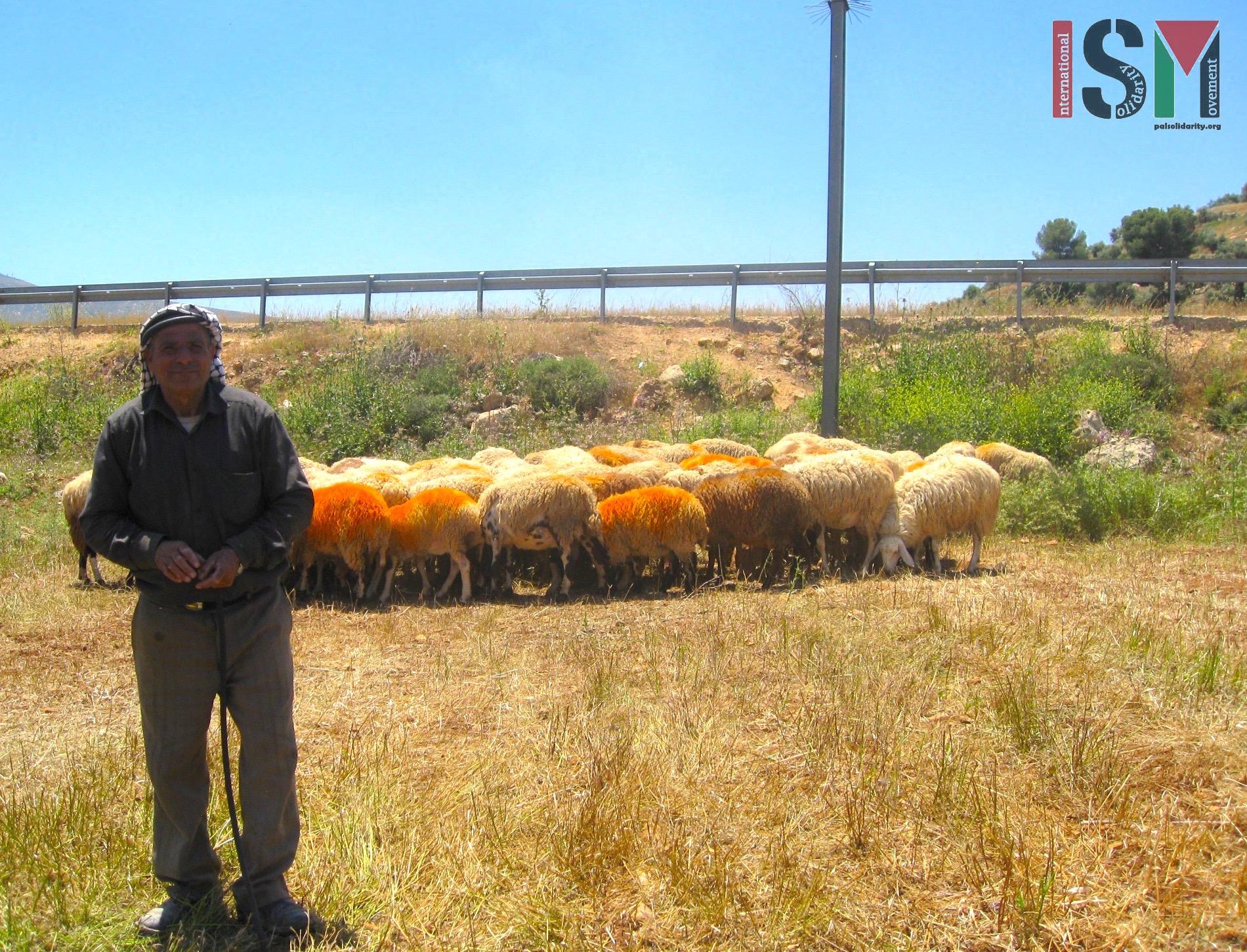 Shepherd from Salem