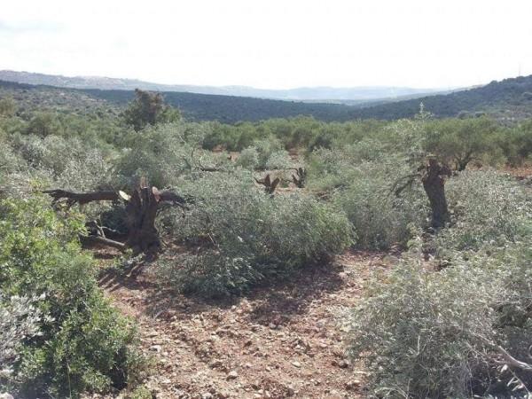 nablus3