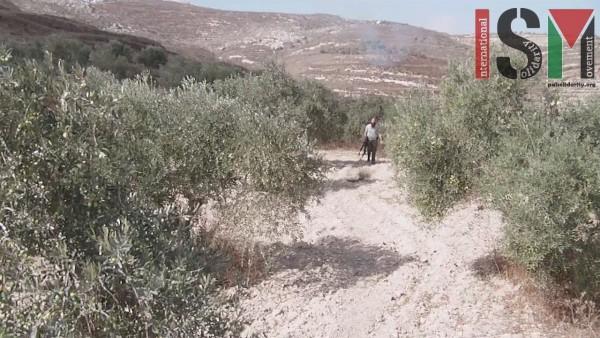 Armed illegal settler