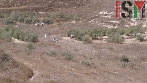 Masked settlers in the olive fields