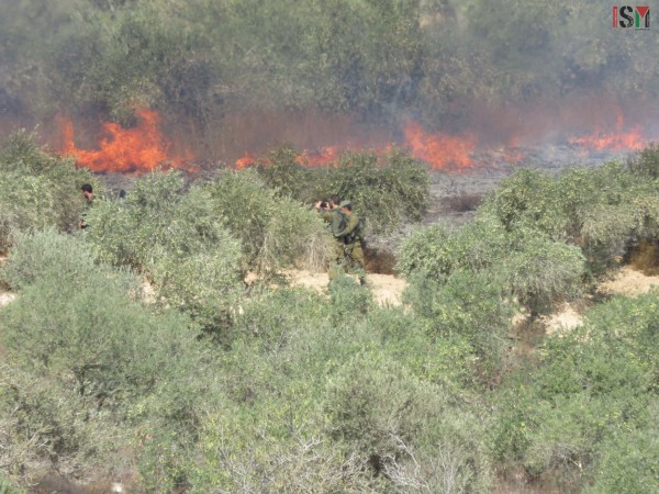 Israeli forces photograph fires