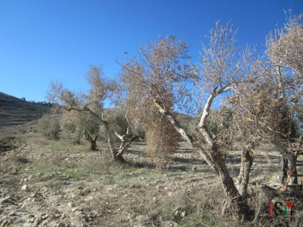 Trees burned in the fire started by settlers on November 2nd.
