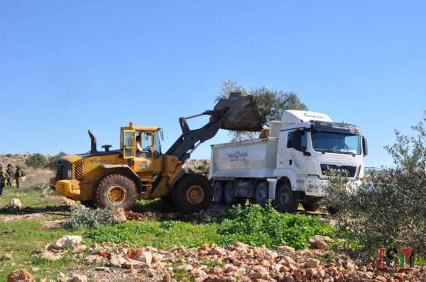 Israeli forces uprooted trees with a bulldozer