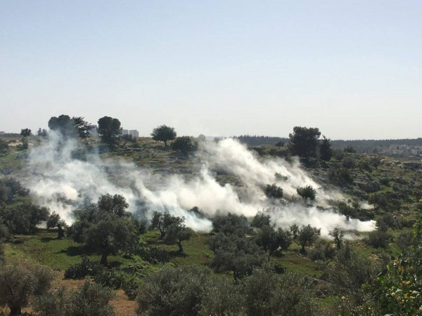 Tear gas cloud in the fields of Ni'lin