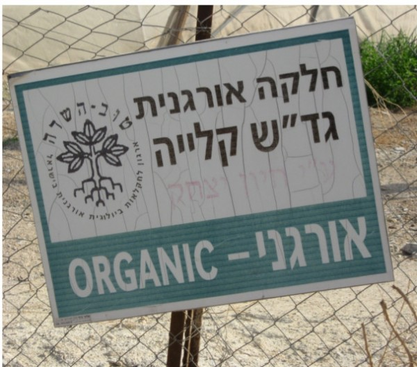 Much Jordan Valley produce is marketed as organic but is certainly not grown fairly