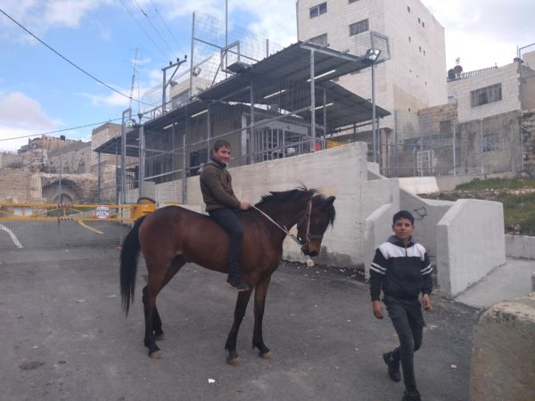 Boys with horse at Salaymeh