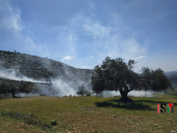 cloud of tear gas rise from the olive-tree valley