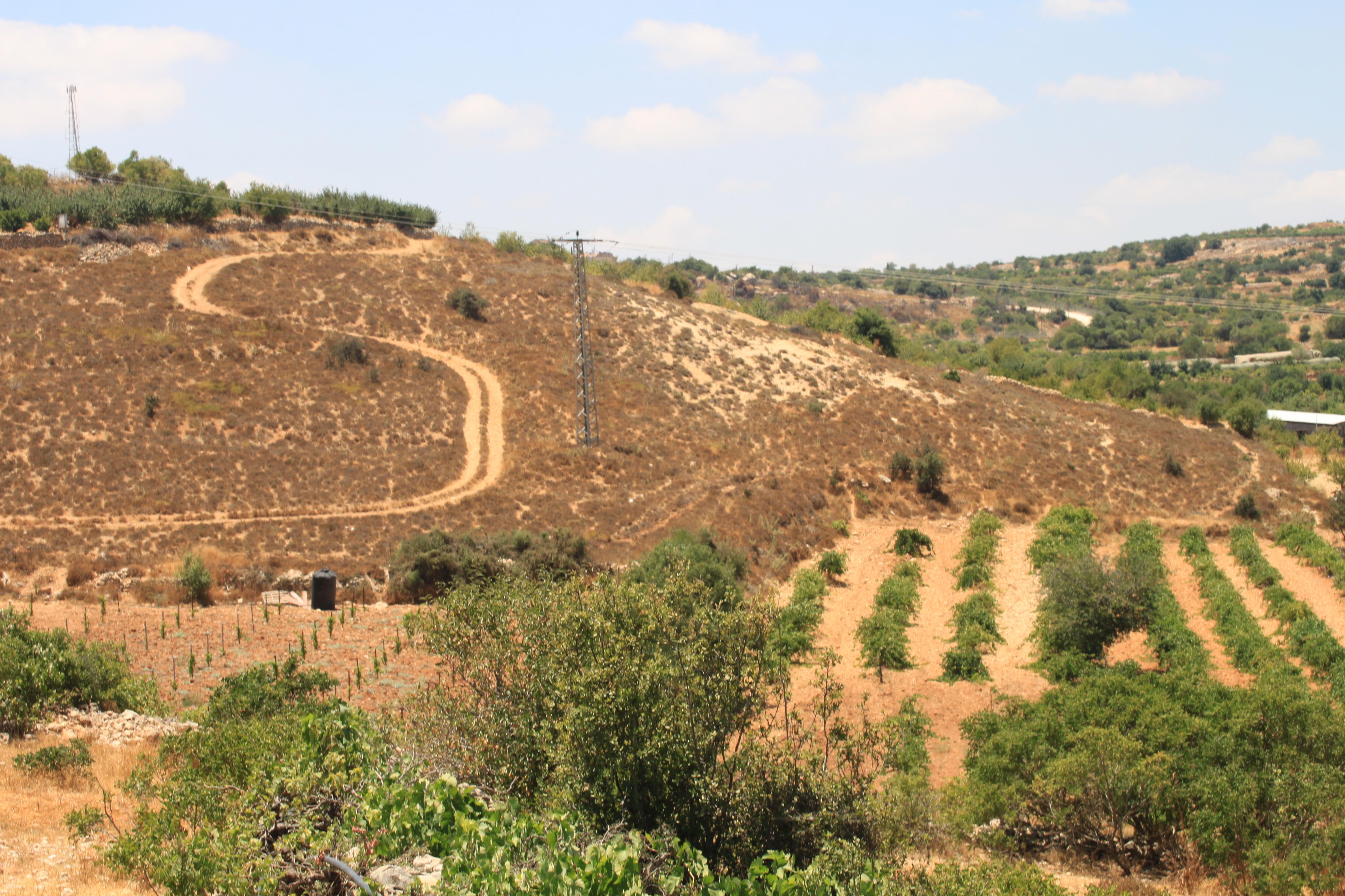 Al Shoroq: The activist farmers resisting Israeli annexation